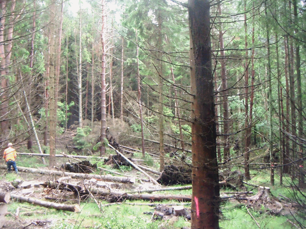 forestry service in cockermouth cumbria