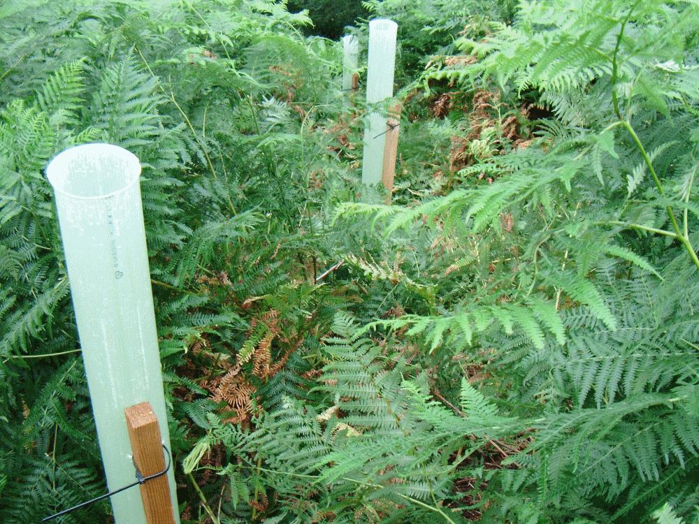 forestry service in cumbria