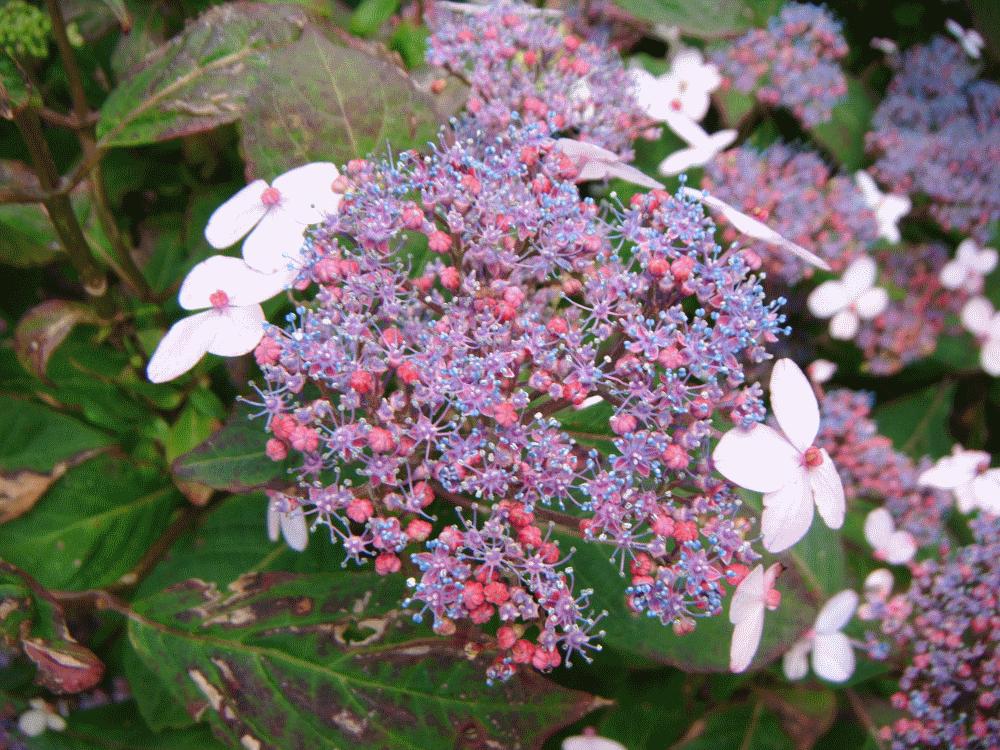 garden care cumbria