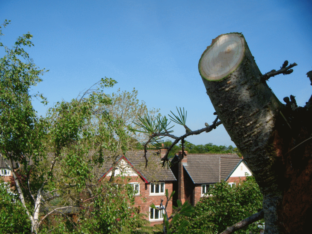 garden tree surgery in cumbria