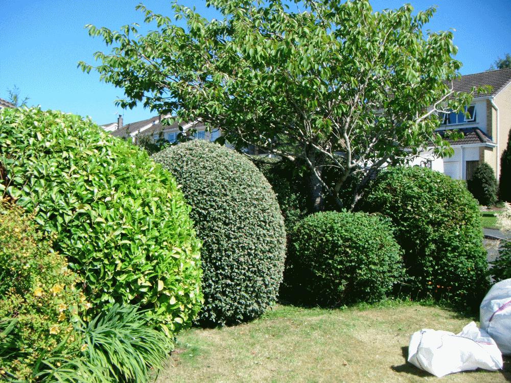 shrub shaping cockermouth