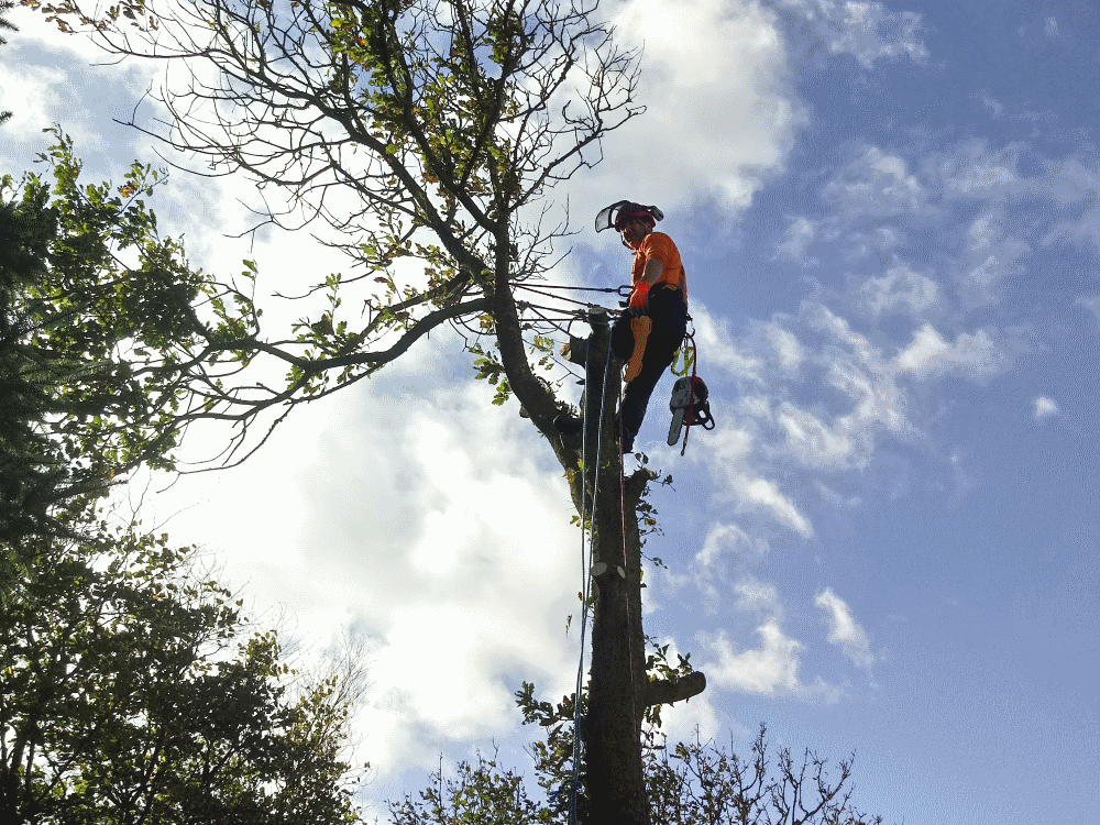 cockermouth tree surgery and tree maintenance