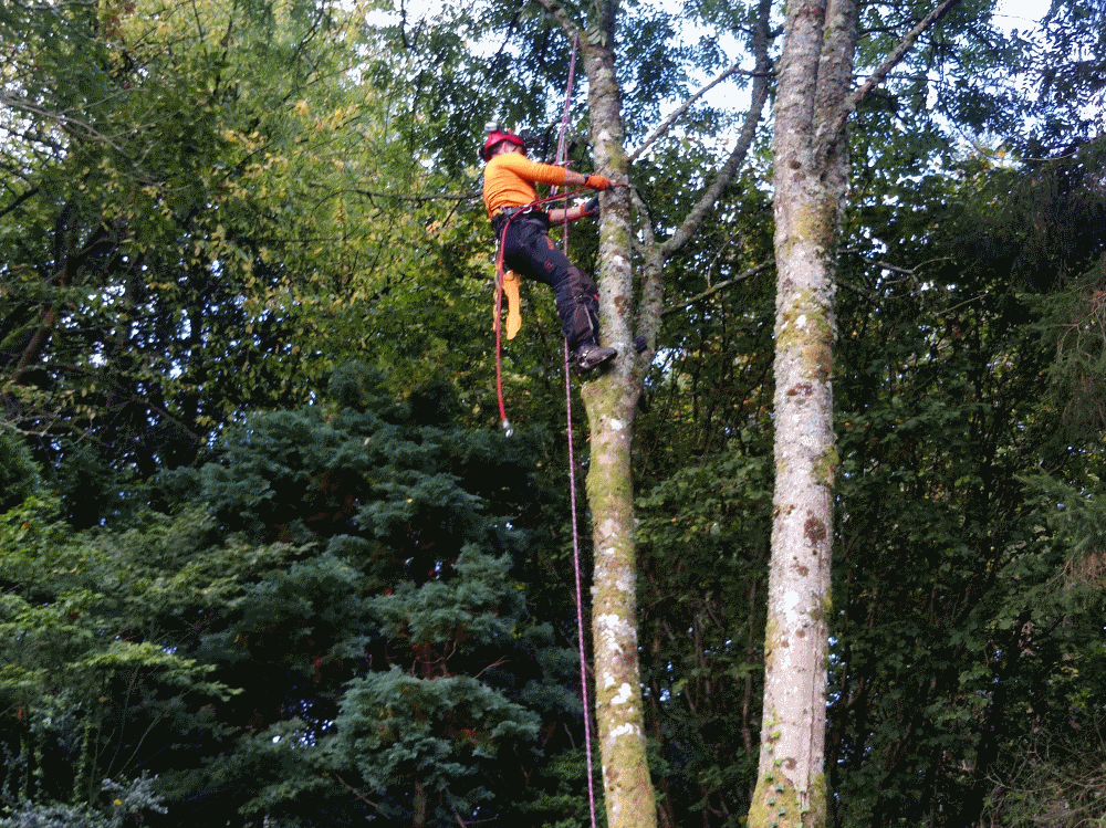 tree surgery in and around cockermouth