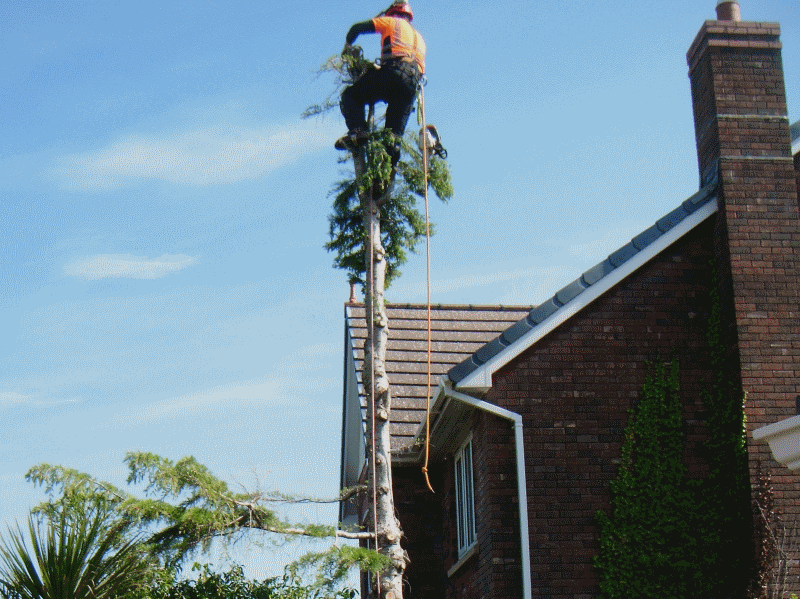 tree surgeon in ambleside