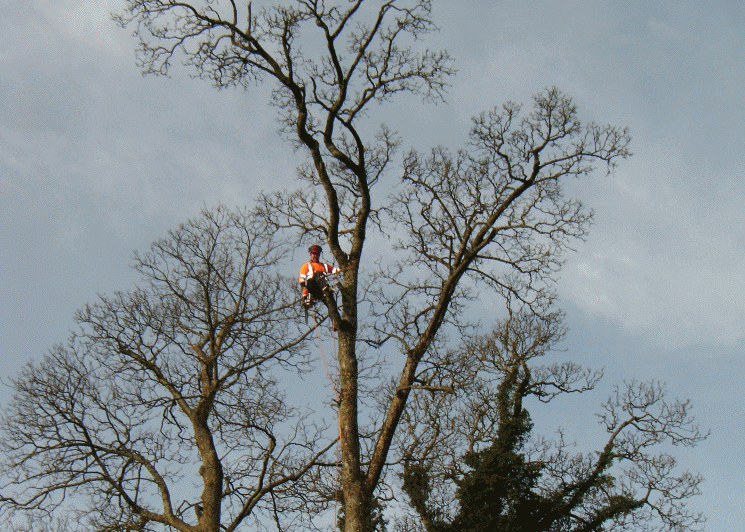tree surgeon in carlisle