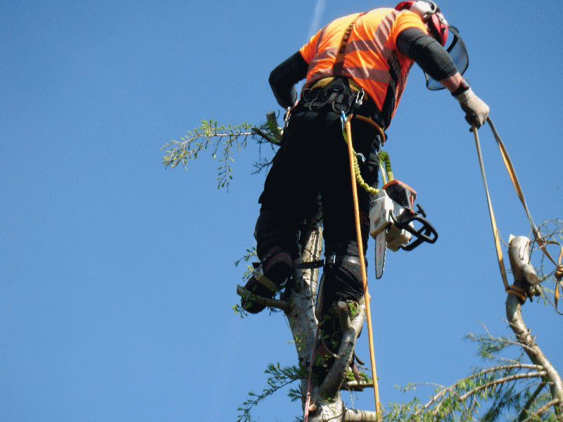 tree surgeon in cockermouth