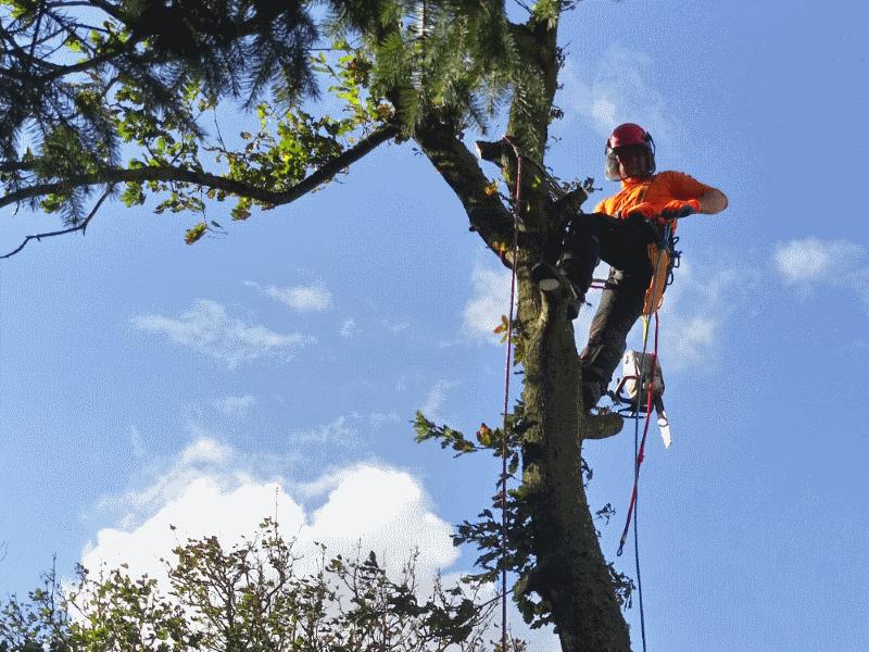 tree surgeon in keswick