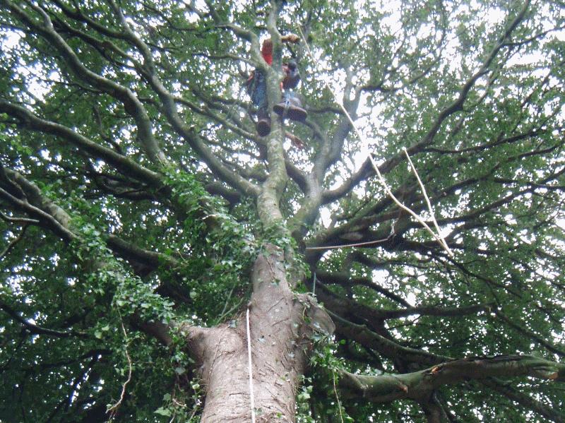 tree surgeon in penrith