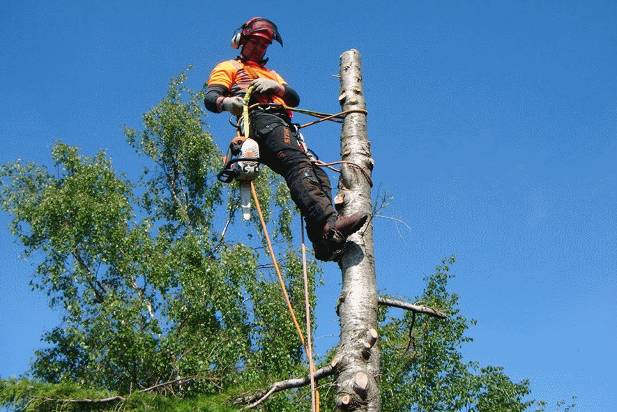 tree surgeon in the lake district