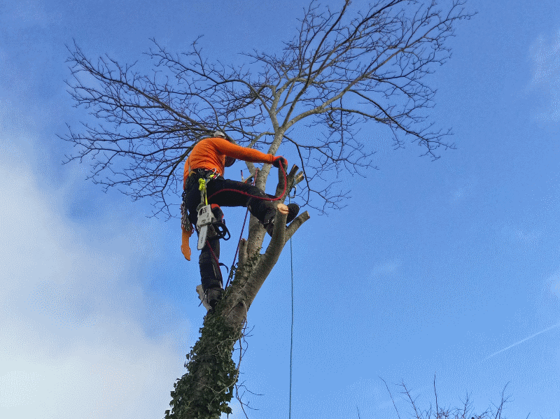 tree surgeon in windermere