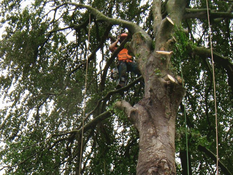 tree surgeon in workington