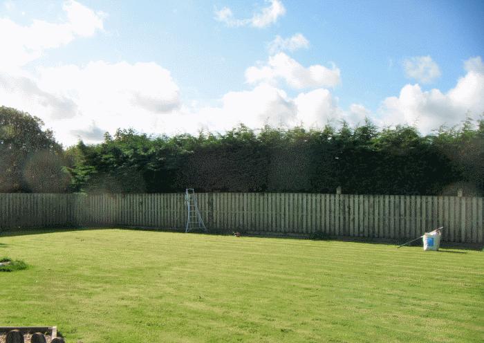 cockermouth hedge restoration