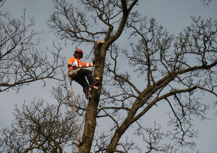 tree surgery project image 1