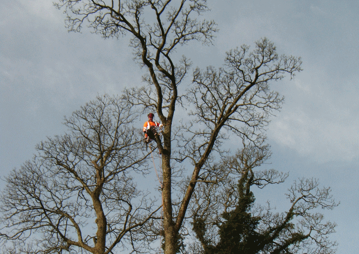tree surgery project image