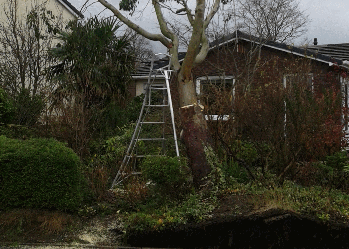 windblown tree image3